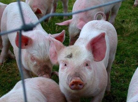 2021年04月22日全国各省市外三元生猪价格,全国生猪价格呈现跌涨调整态势