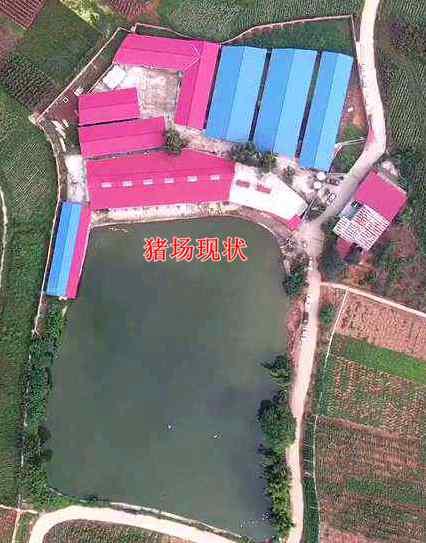 四川简阳家庭农场特驱让他重新养猪致富!
