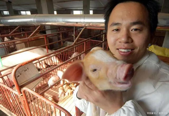 """中国""""养猪第一股""""倒下!饿死200万肥猪"""