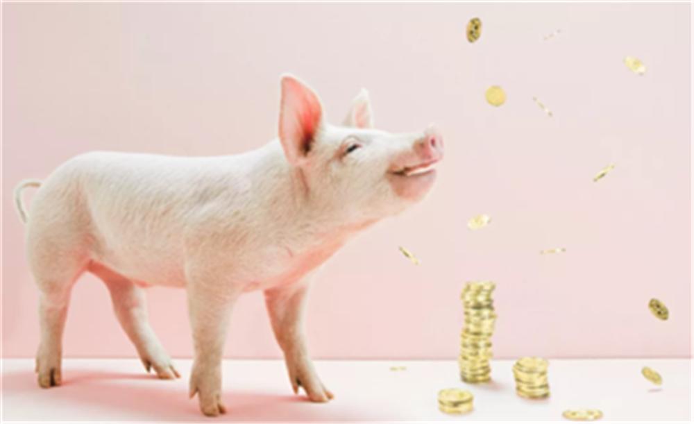 """猪价惨遭""""滑铁卢"""",猪企业绩集体走低!今年养猪还有钱赚吗?"""