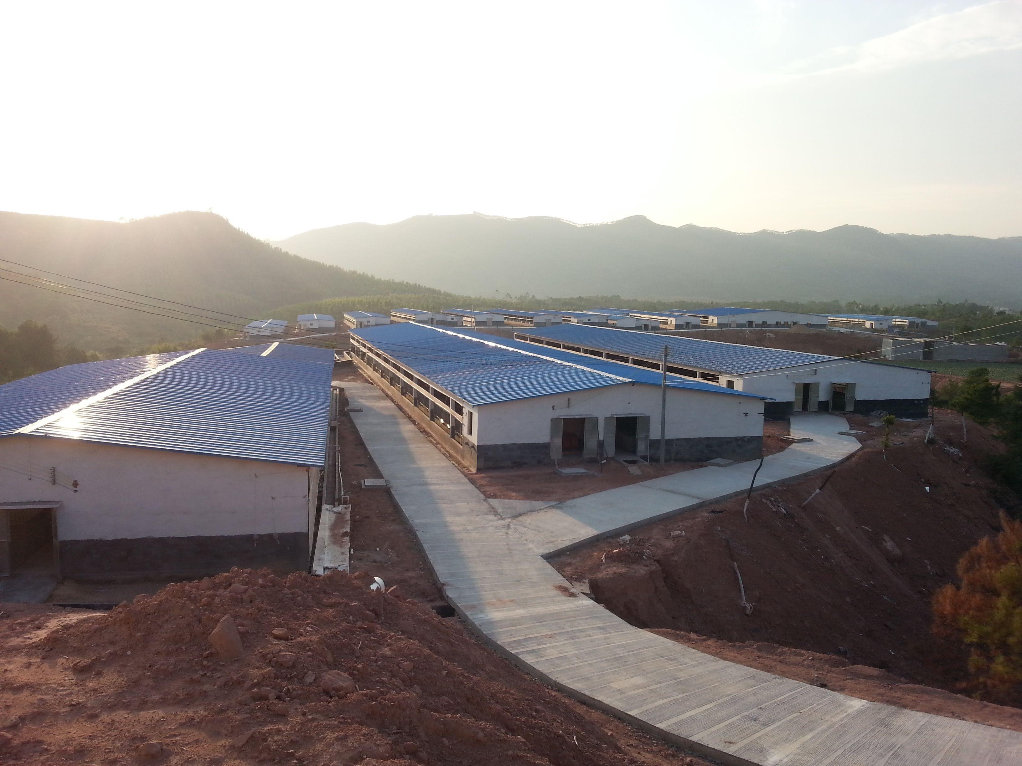 智能化、标准化、规模化 麻阳生猪养殖快速转型升级!项目可同时繁养母猪1.5万头、育肥猪4.2万头!