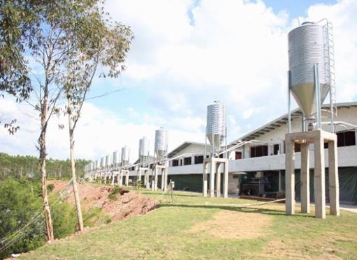 高床发酵型生态养猪基地
