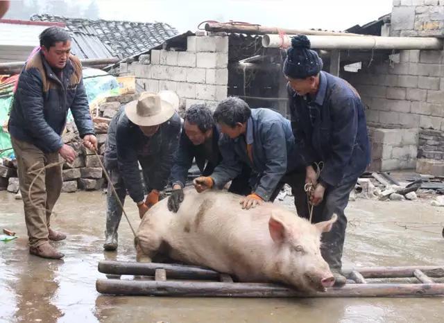 养猪造成污染?退养!在环保和生猪稳产保供之间该如何抉择!