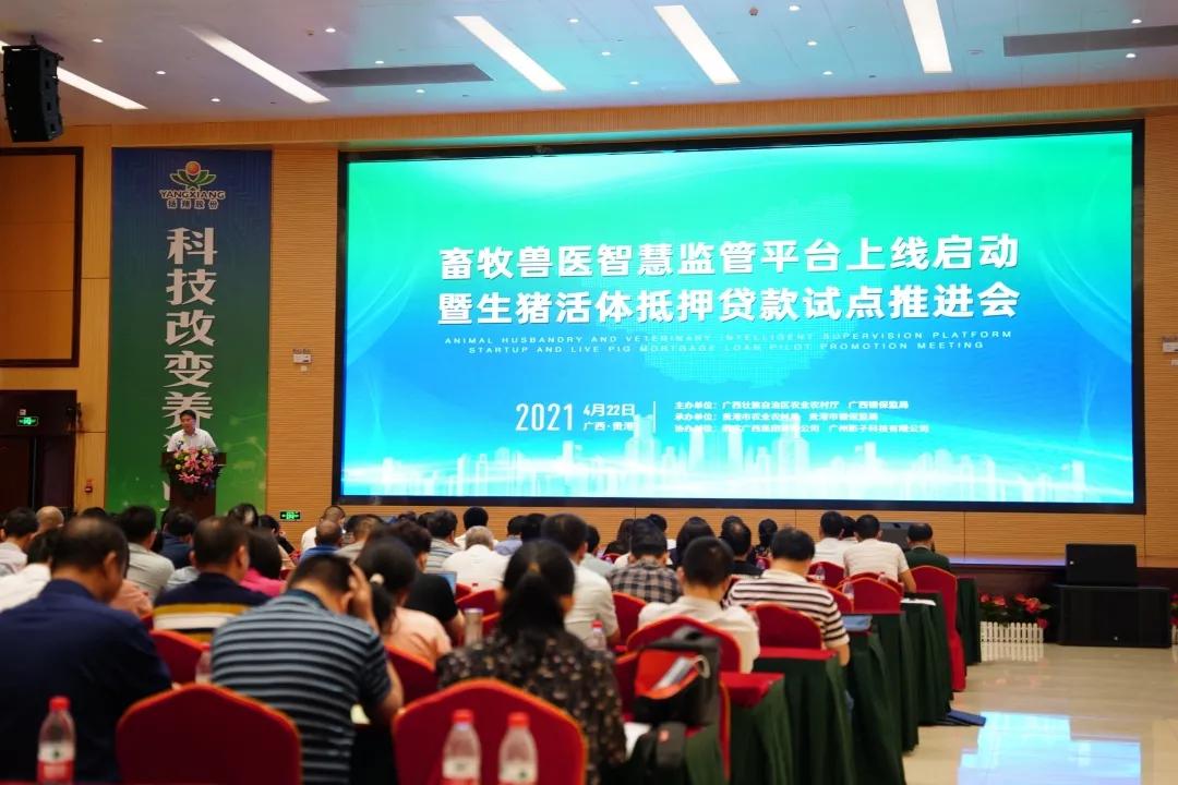 广西上线畜牧兽医智慧监管平台,推进生猪活体抵押贷款工作!