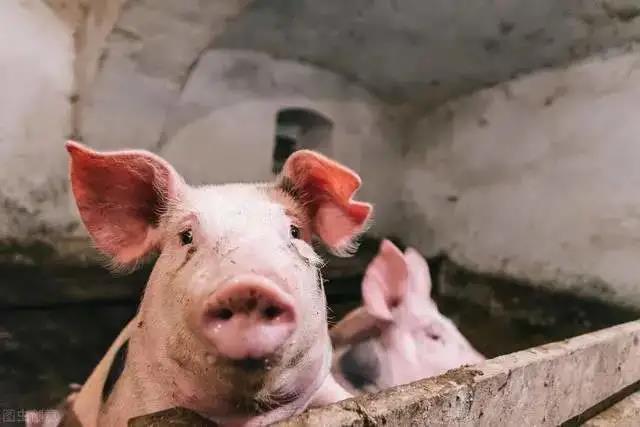 5月1日起整个中国划分为5个养猪大区,分区化会不会带来猪价分化?