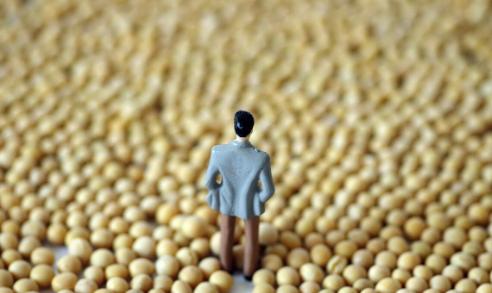 """1460万吨巴西大豆来了,美国大豆""""要完""""?创下8年新高后大跌"""