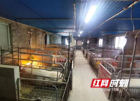 湖南慈利:以绿色为产业底色,谋求生猪养殖产业转型升级