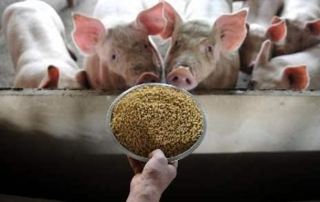 规模猪场各类猪只标准饲喂程序,适应于事业部所有瘦肉型猪