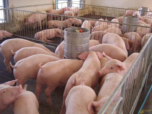 猪肉价格连降12周,老百姓为什么不愿购买?原因实在太现实!