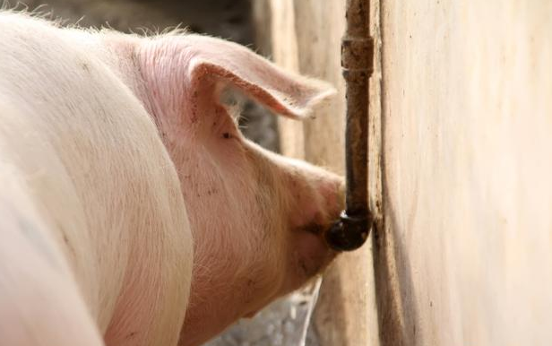 3-4月份全国7省生猪饲料养殖调研汇总报告——出栏量明显增长,新进母猪场基本转为二元母猪