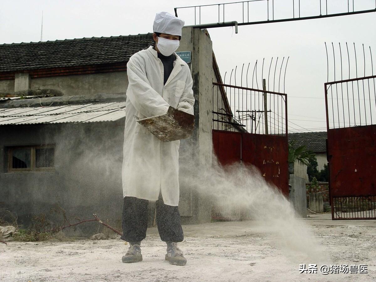 猪流行性腹泻造成损失高达几百万,如何采取措施防控?