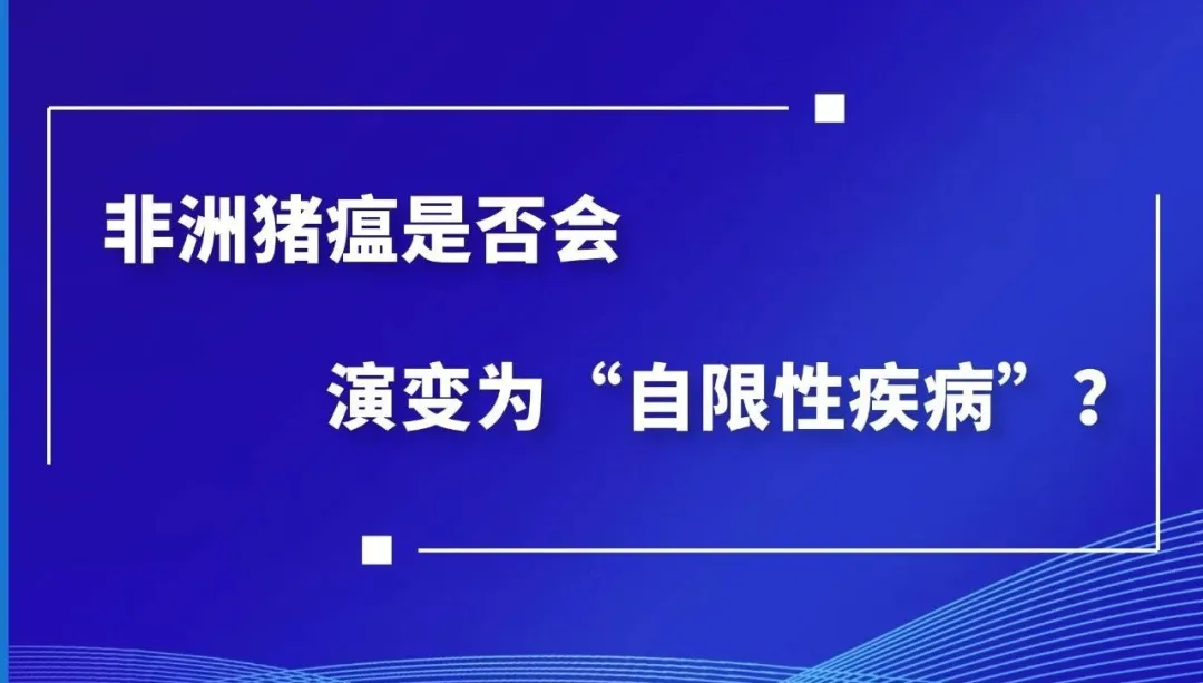 """常洪涛:非洲猪瘟是否会演变为""""自限性疾病""""?"""