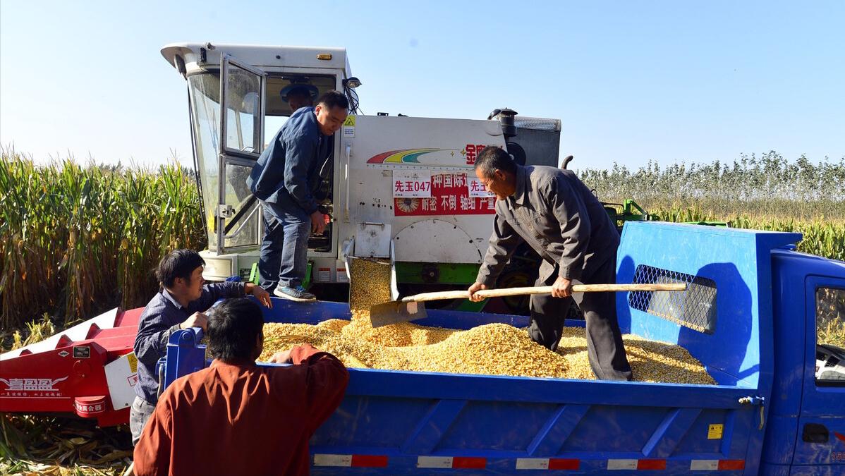 5月6日饲料原料价格,国际粮价大涨,国内玉米却跌了!1.5元还有戏?