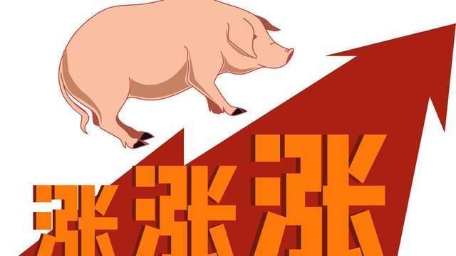 猪价,2021年像极了2019年!猪价还有冲高的机会?