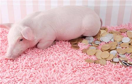 看完各大上市猪企的一季报,我只想问: 除牧原外,其他养猪巨头的利润都跑哪了?
