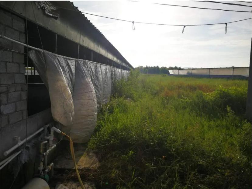 细思极恐!一只蚊子可黏附1亿个细菌和病毒,夏季防非必须要防蚊