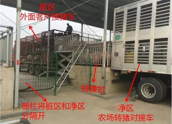 售猪中转平台,预防非瘟感染的一项重要设施!