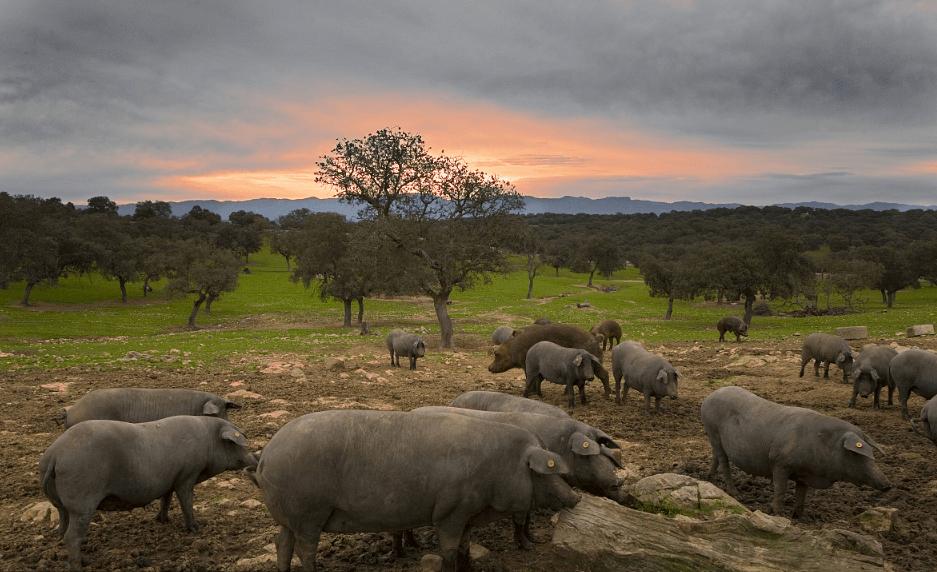 4月份猪价暴跌,5月猪价连环跌,季节性反弹将定在6月至7月?