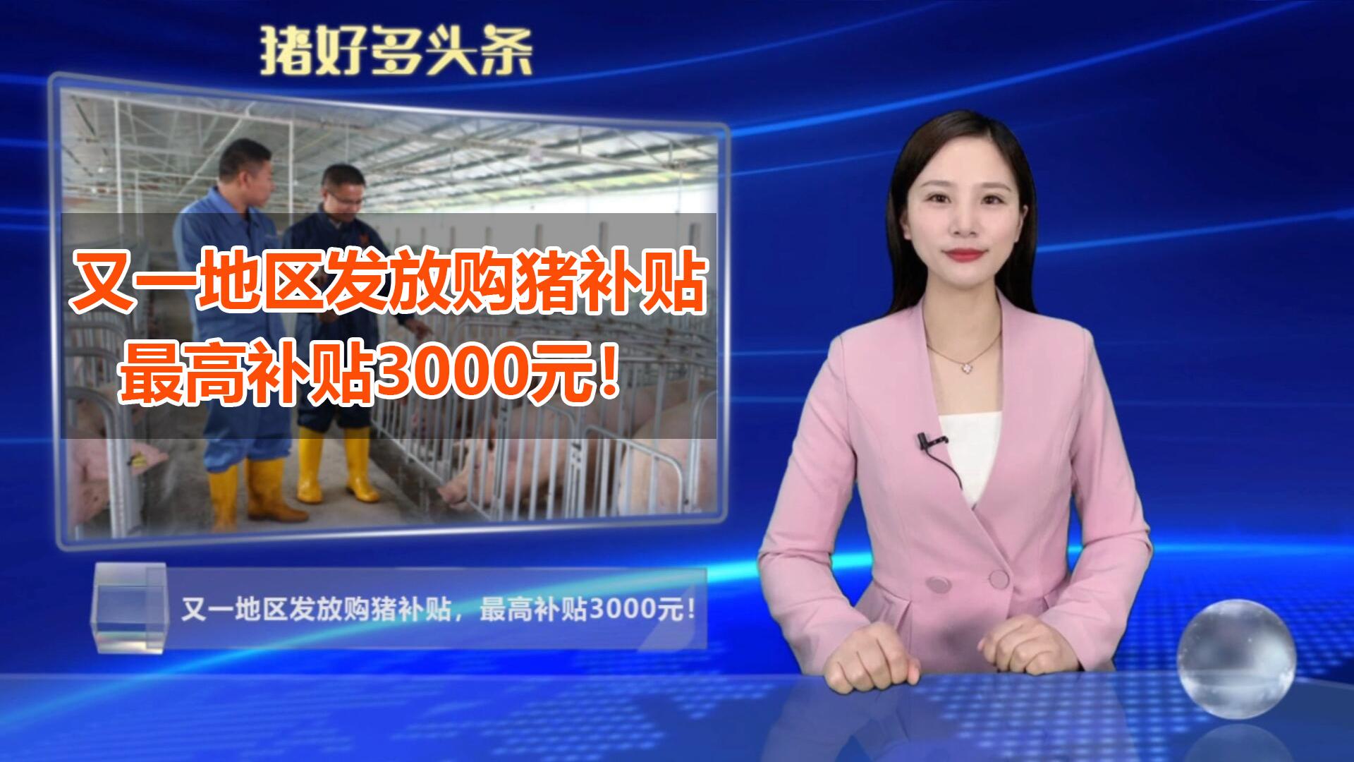 好消息!又一地区发放购猪补贴,最高补贴3000元/头!