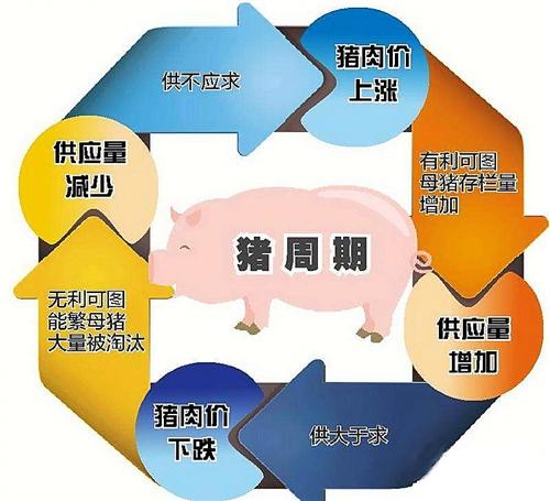 看透本轮猪价急跌的本质,做好万全应对之策