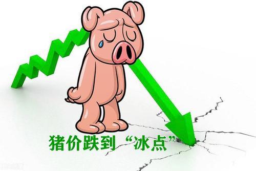 李俊柱:猪市低潮期的四大应对之策,你准备好了吗?