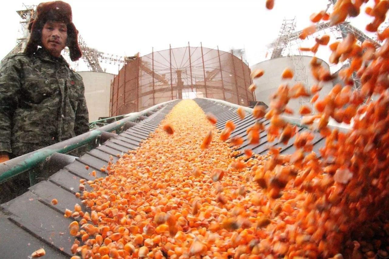 玉米供应紧张态势不减价格上涨,但资本却更看好大豆进口