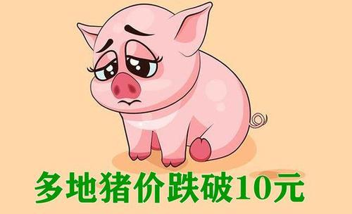一张图道出了当前养猪人的心声!猪价跌跌何时休呀!