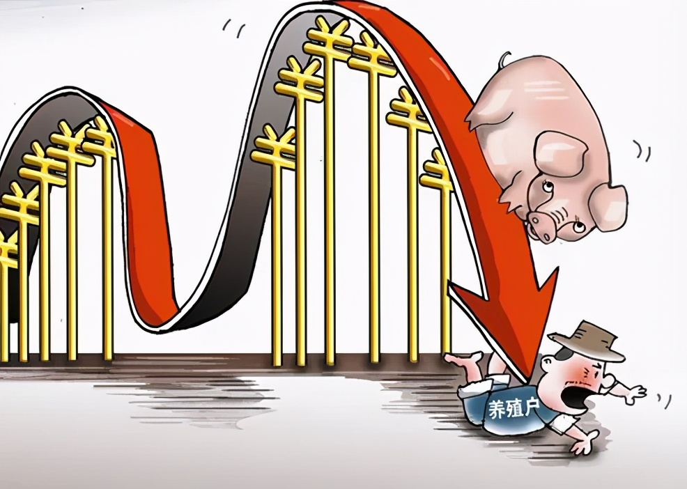 中国生猪价格暴跌!运输限制刺激市场失衡