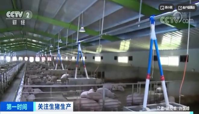 好消息!我国生猪生产保持恢复,猪肉价格连续15周回落