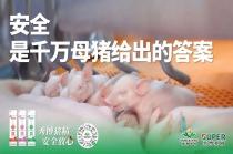 年服务超200万头母猪!实力验证秀博猪精够安全