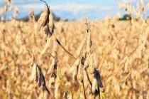 5月17日全国豆粕价格行情,饲料价格高位运行,豆粕价格还能维持多久?