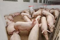 5月17日猪价跌幅超47%!饲料原料5月掀起3轮涨价潮,猪价能否就此翻身?