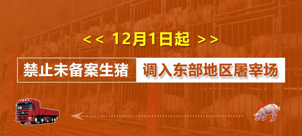 12月1日起,禁止未备案生猪调入东部地区屠宰场