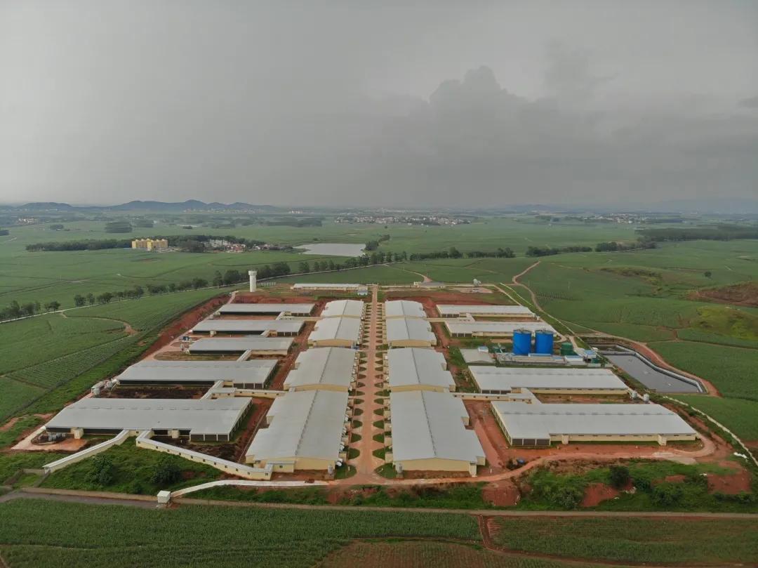 名企推介:广西农垦永新良圻第五原种猪场