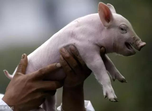 """10元猪价下,仍有""""期望者"""",二季度猪价会止跌反弹吗?"""
