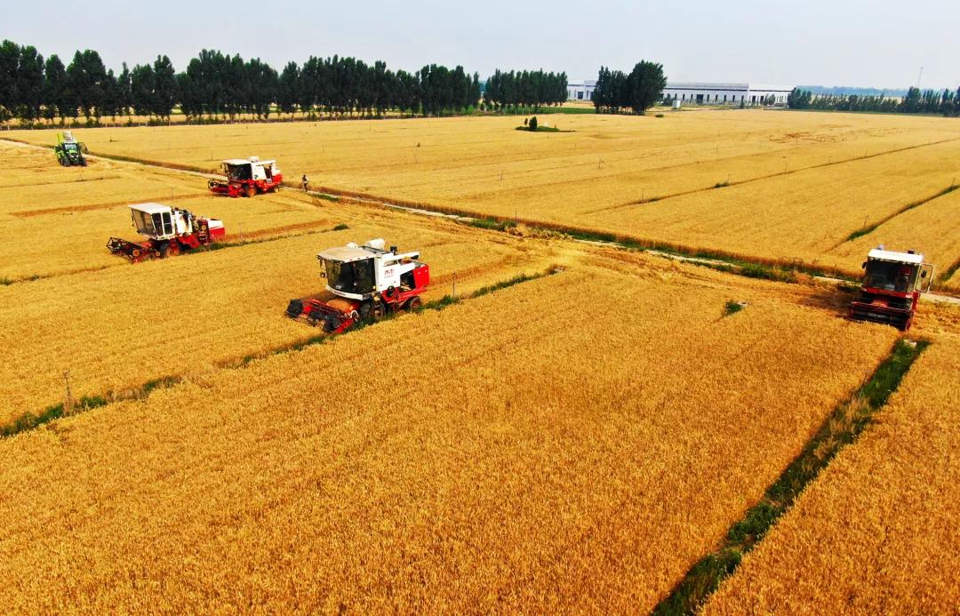 从水稻到种猪,你可能不知道的动植物杂种优势利用