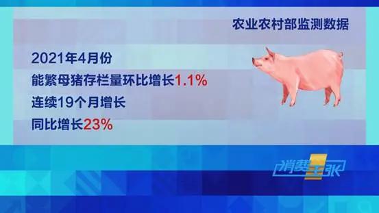 深度报道:猪肉价格跌到养殖成本价!养殖户要缩减规模止损吗?