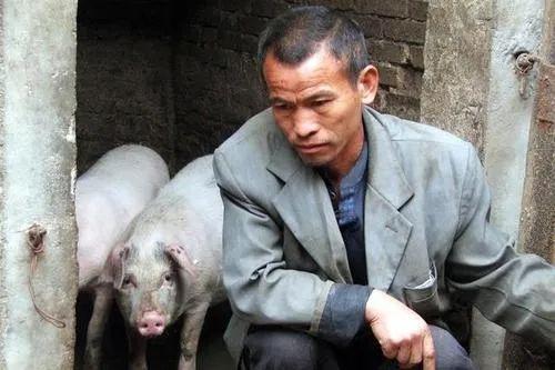 5月31日10公斤仔猪价格,仔猪暴跌还得求人买?养户:不如留着自己吃