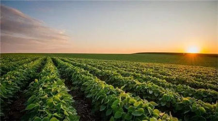 先正达集团的第一艘大豆运输船抵达中国!这是先正达全球农业价值链的第一阶段
