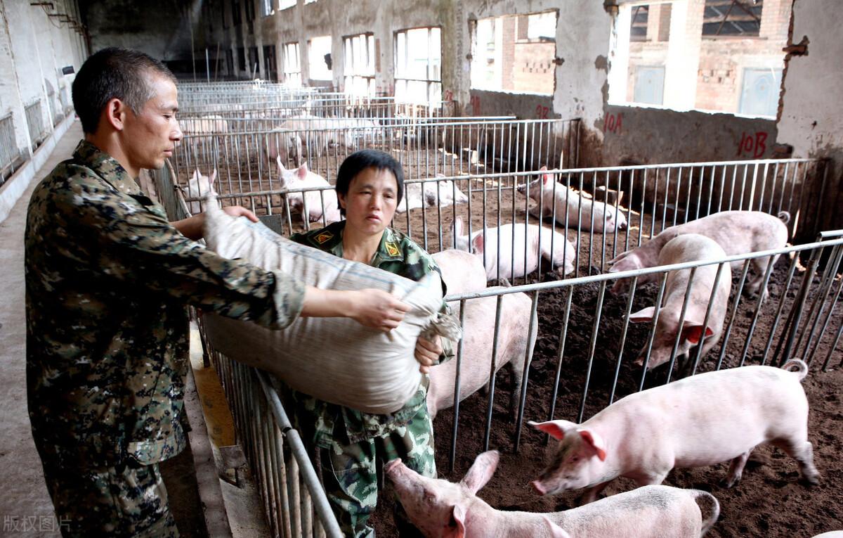 各地养猪补贴新政来袭,另一方面环保升级施压,养猪户两难
