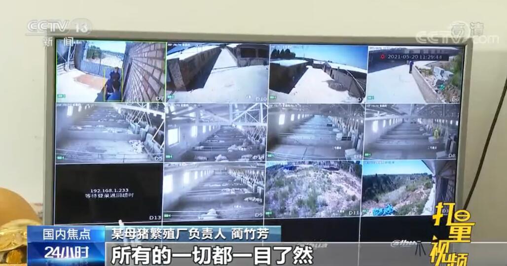 1人管理3千头猪!陕西澄城引进新技术,助力生猪市场供应
