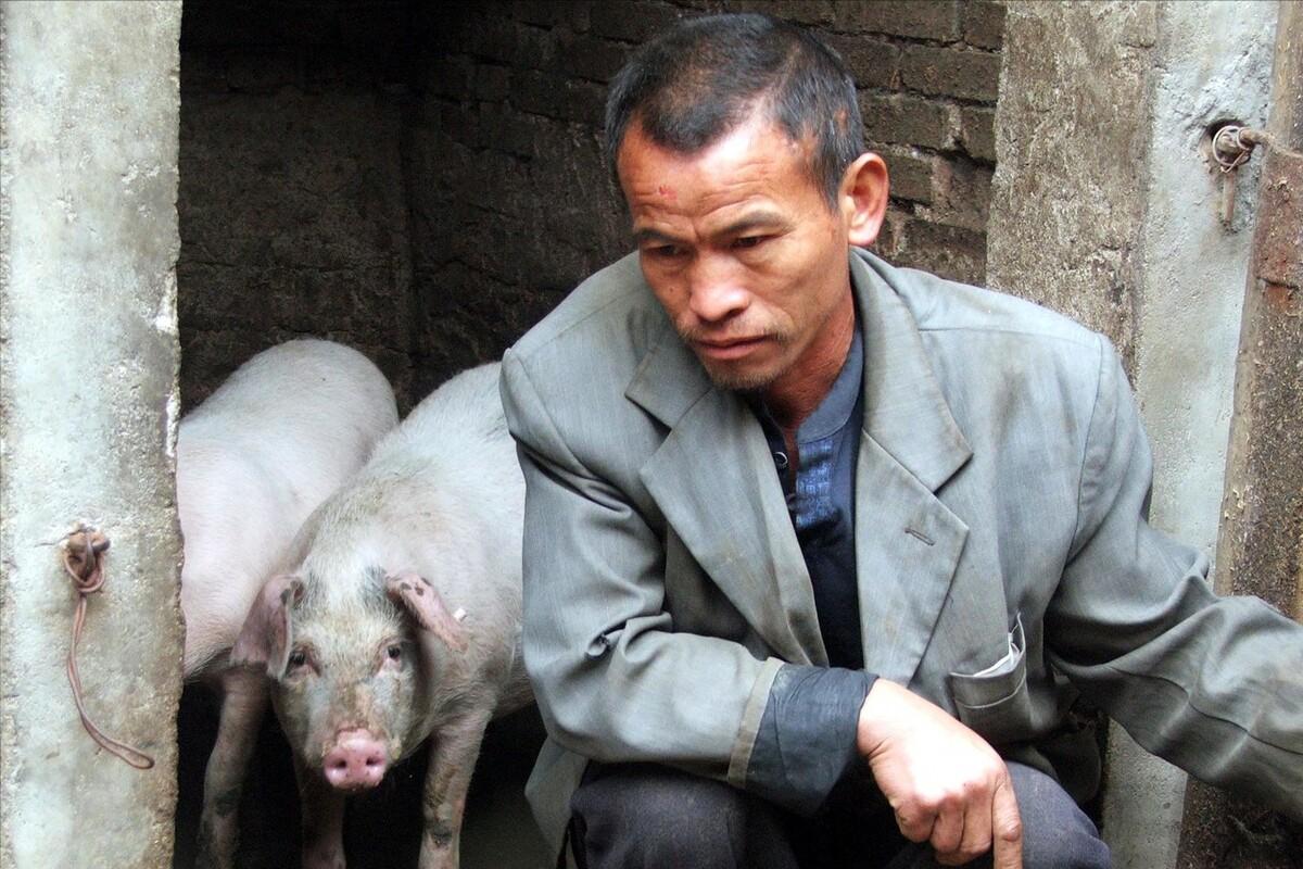 6月10日20公斤仔猪价格,仔猪下跌毫无顾忌,养猪业要深受重创?