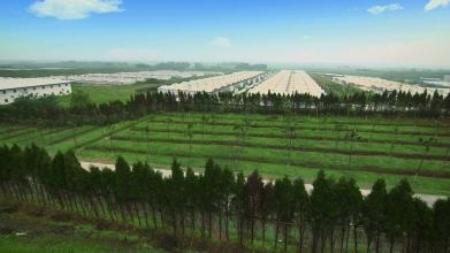 总投资3亿元!天邦股份种猪繁育基地落户黑龙江苇河林区!