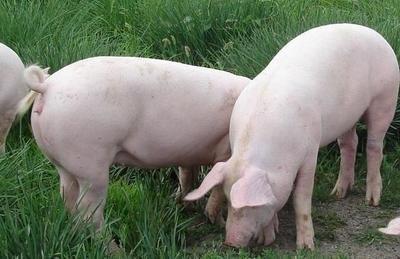 2021年06月13日全国各省市内三元生猪价格,全国生猪价格呈现窄幅跌涨态势!