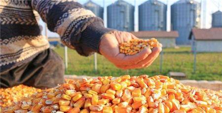 好天气重挫外盘,连玉米大幅下跌!政策调控力度不减,进口玉米持续投放……