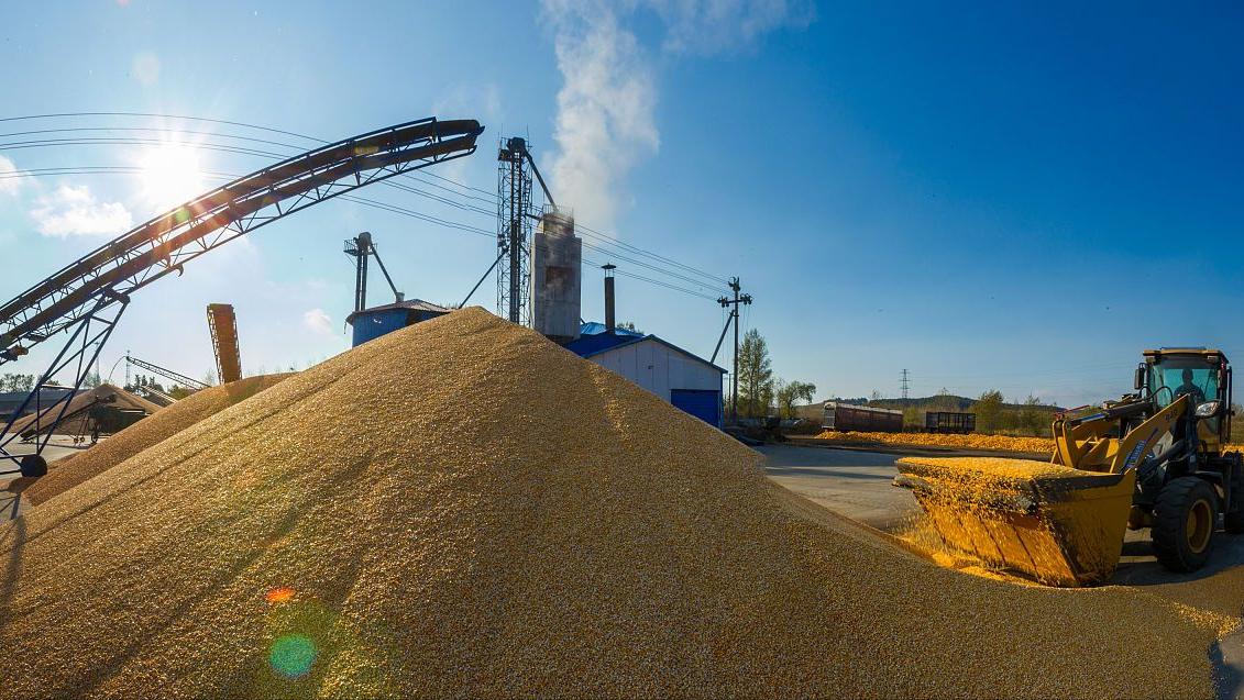 """进口玉米二拍来袭,猪价""""破7入6""""大跌60.6%,6月行情一跌不起?"""