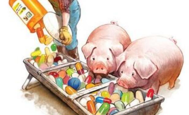 全球无抗畜禽养殖持续发展!正在跨越地区和物种发展