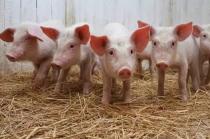 新华社:透视国家发改委预警生猪价格的背后,大型猪企猛烈扩张惹的祸?