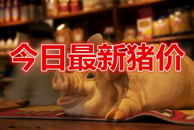 2021年06月20日全国各省市土杂猪生猪价格,猪市呈现大部下跌,抛售现象再次加大!