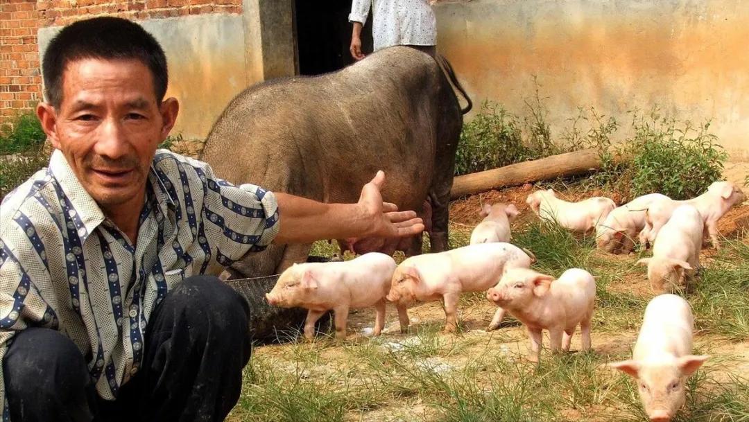 猝不及防!危险一步步逼近?海关正式公布新数据,养猪面临重大考验!